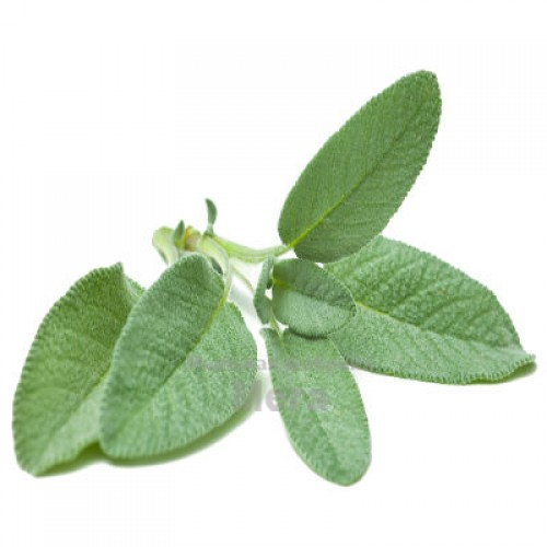 Купить  Воск Шалфея - репеллент и дезинфектант, 10 грамм  в  Мыльная фабрика