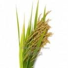 Купить  Молочно рисовый комплекс, 100 мл  в  Мыльная фабрика