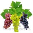 Купить  Ароматический экстракт Винограда, 1 литр  в  Мыльная фабрика
