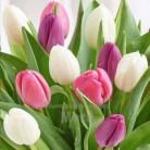 Купить  Отдушка Blooming Tulips, 1 литр  в  Мыльная фабрика