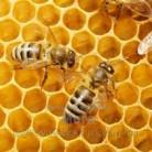 Купить  Ароматизатор для свечей Пчелиный Воск 1 л  в  Мыльная фабрика