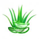 Купить  Алоэ вера натуральный порошок для волос и кожи, 1 кг  в  Мыльная фабрика