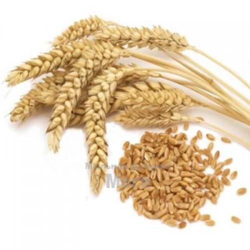 Купить  Концентрат растительных ДНК пшеницы, 1 литр  в  Мыльная фабрика