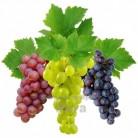 Купить  Ароматизатор для молочных продуктов Виноград, 1 литр  в  Мыльная фабрика