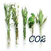 Экстракты СО2